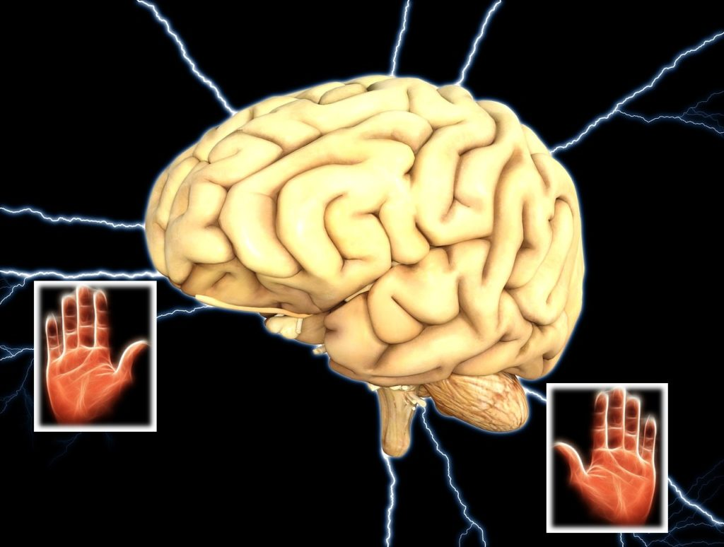 Human brain is directly connected to the lines forming on the palm