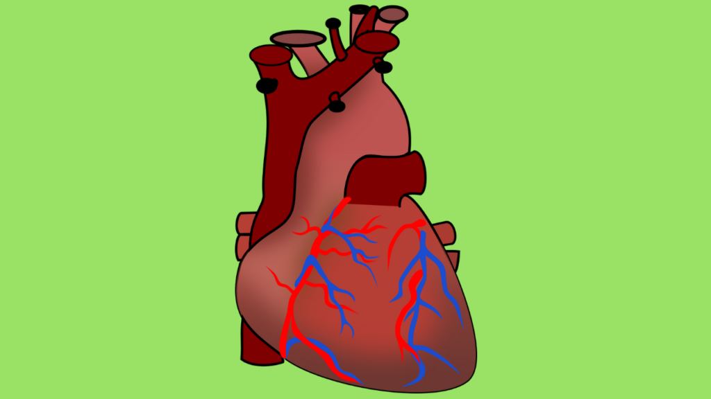 poor circulation of blood and heart disease