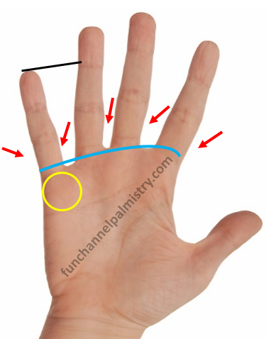 long little finger in palmistry